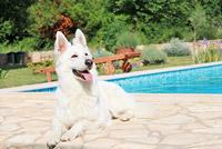 Tierfreundliche Hotels auf booking.com